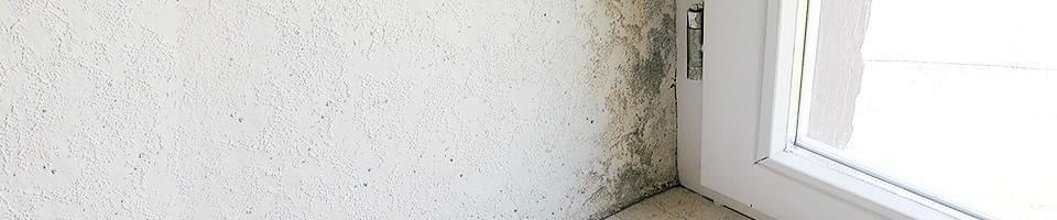 enlever moisissure velux affordable la moisissure with enlever moisissure velux une bonne. Black Bedroom Furniture Sets. Home Design Ideas